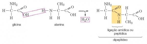Exemplo de reação peptídica ¹