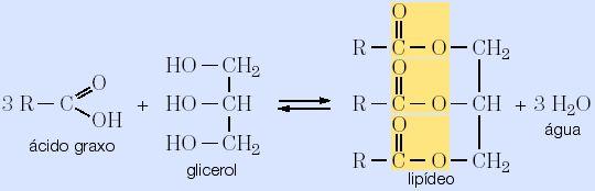 quimica lipidios2