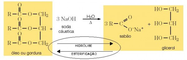 quimica lipidios4