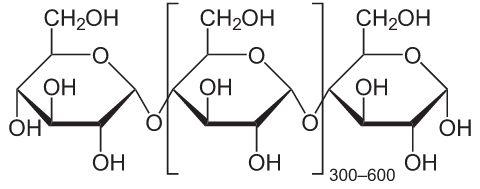 Amido Bioquímica Infoescola