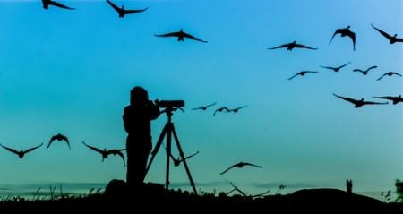 Birdwatching. Foto: Erkki Alvenmod / Shutterstock.com