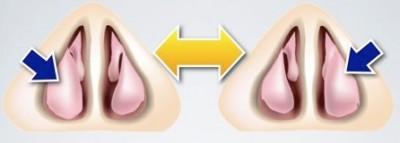 ciclo nasal