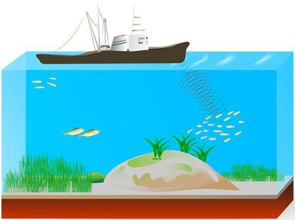 O sonar pode ser utilizado para a localização de cardumes. Ilustração: Designua / Shutterstock.com