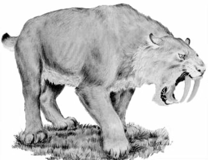 Smilodon. Foto: library.ca.gov / Public Domain / via Wikimedia Commons