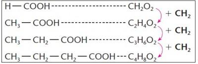 homologa_acidos