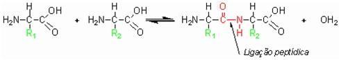 Figura 2. Reação química entre dois aminoácidos.