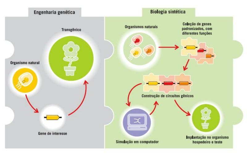 Fig 1: Ilustração do processo da engenharia genética e adaptação para Biologia Sintética, Fonte: (REVISTA CH, 2014)