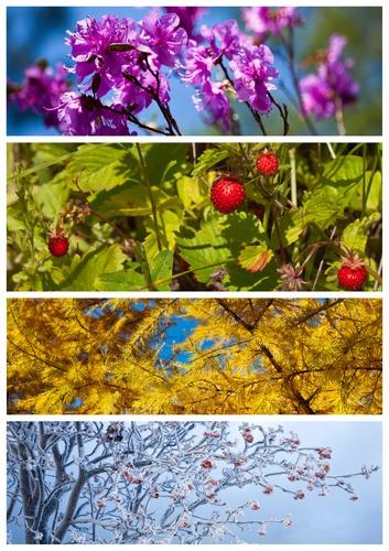 Estações do ano. Fotos: Katvic / Shutterstock.com