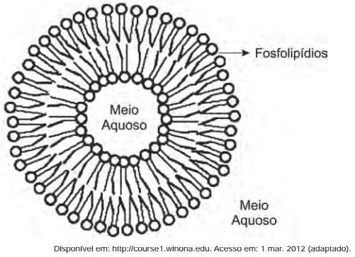 fosfolipidios