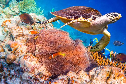Os recifes de corais abrigam uma grande biodiversidade. Foto: Andrey Armyagov / Shutterstock.com