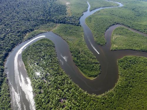 Floresta Amazônica. Foto: Filipe Frazao / Shutterstock.com