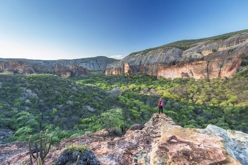 Parque Nacional Serra da Capivara, com vegetação de Caatinga. Foto: Andre Dib / Shutterstock.com
