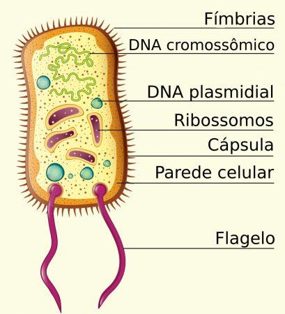 Exemplo de célula procariótica. Ilustração: in-art / Shutterstock.com [adaptado]