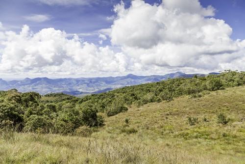 Paisagem de cerrado. Foto: Filipe Frazao / Shutterstock.com