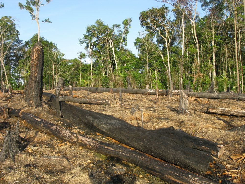 Área desmatada na Floresta Amazônica
