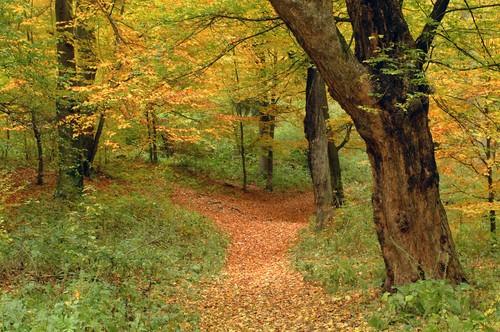 Floresta temperada na Romênia (Europa). Foto: Florin Mihai / Shutterstock.com