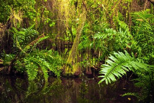 Mata de uma floresta tropical. Foto: Eugene Sergeev / Shutterstock.com