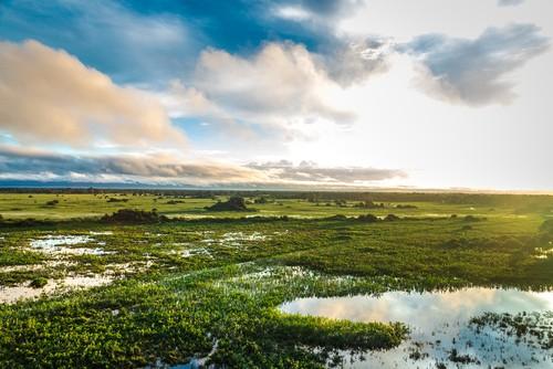 Pantanal. Foto: Filipe Frazao / Shutterstock.com