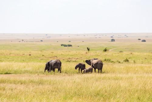 Vegetação de savana na África. Foto: TTphoto / Shutterstock.com
