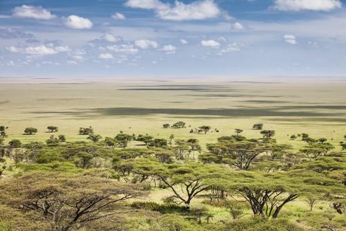 As vastas planícies do Serengueti (Tanzânia). Foto: mdd / Shutterstock.com