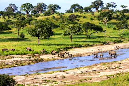 Serengueti. Foto: GTS Productions / Shutterstock.com