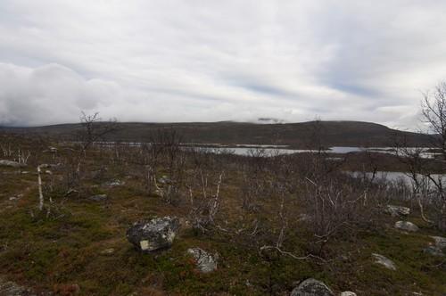 Paisagem de uma região de tundra. Foto: Vkhom68 / Shutterstock.com