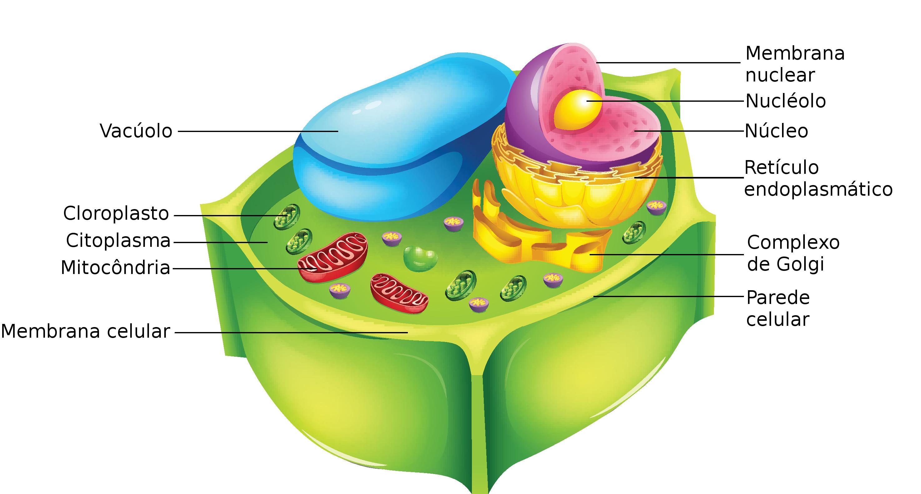 Estruturas de uma célula vegetal. Ilustração: BlueRingMedia / Shutterstock.com [adaptado]