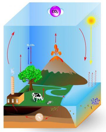 Ciclo do carbono. Ilustração: Designua / Shutterstock.com