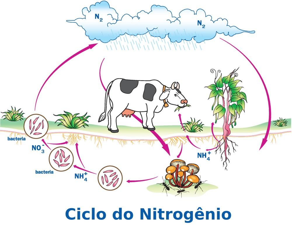 Ciclo do nitrogênio. Ilustração: Kuroro Lucifer / Shutterstock.com