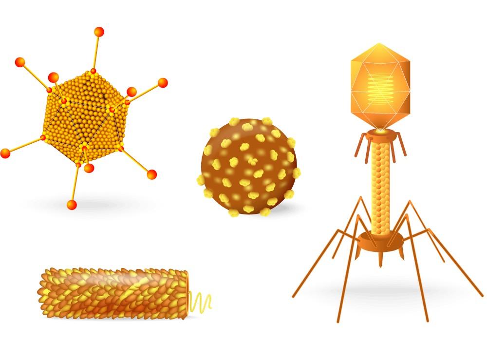 As diferentes formas existentes de vírus. Ilustração: Designua / Shutterstock.com