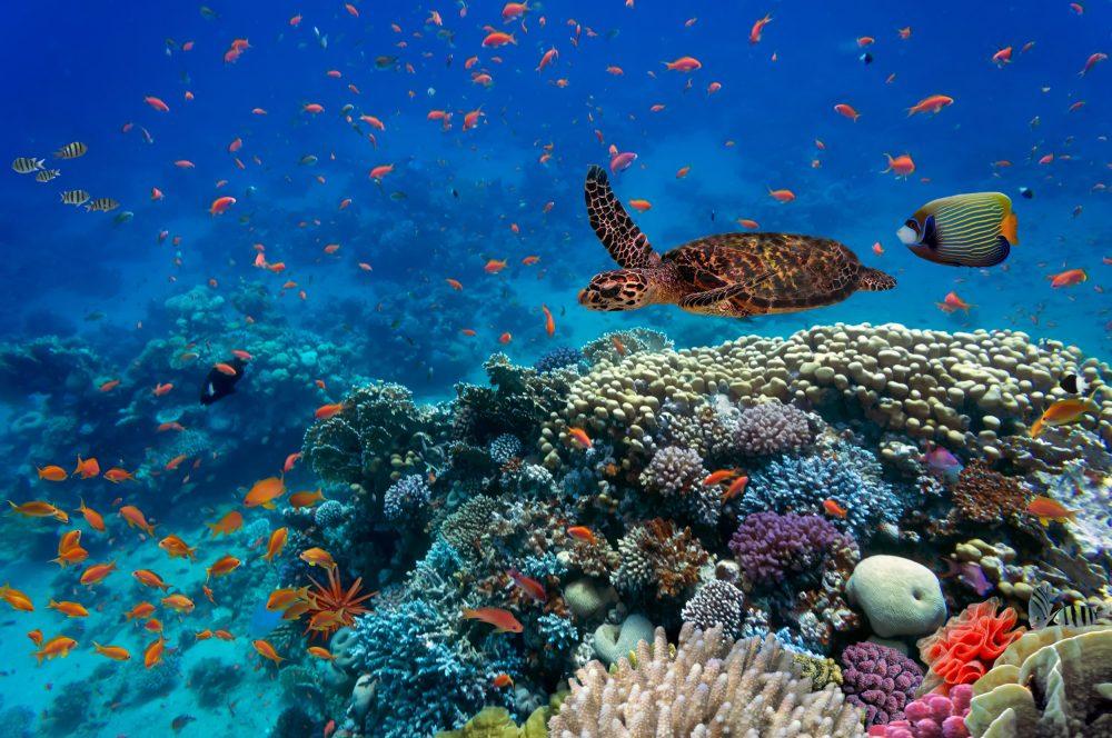 Resultado de imagem para ecossistema marinho