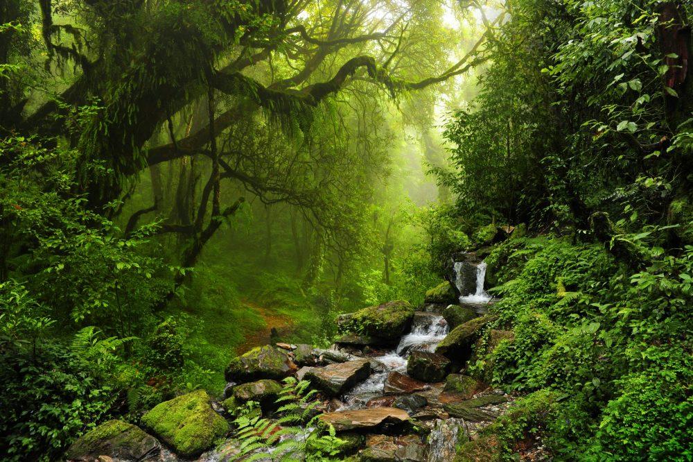 Resultado de imagem para floresta subtropical