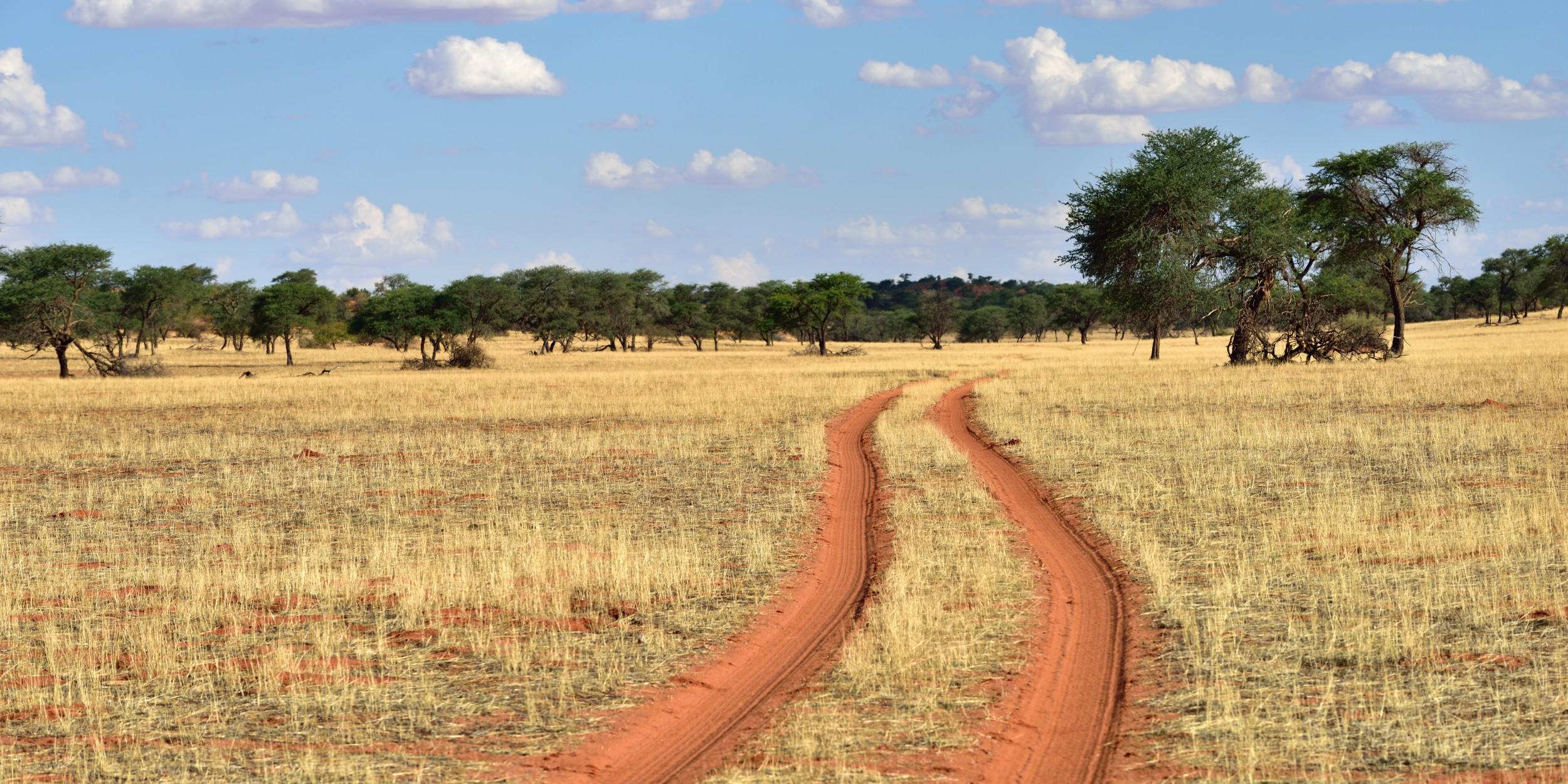 Deserto de kalahari bioma do sul da frica infoescola for Cabina sul lungomare kalahari
