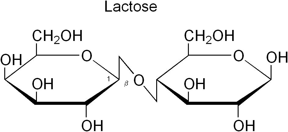 lactose - bioqu u00edmica
