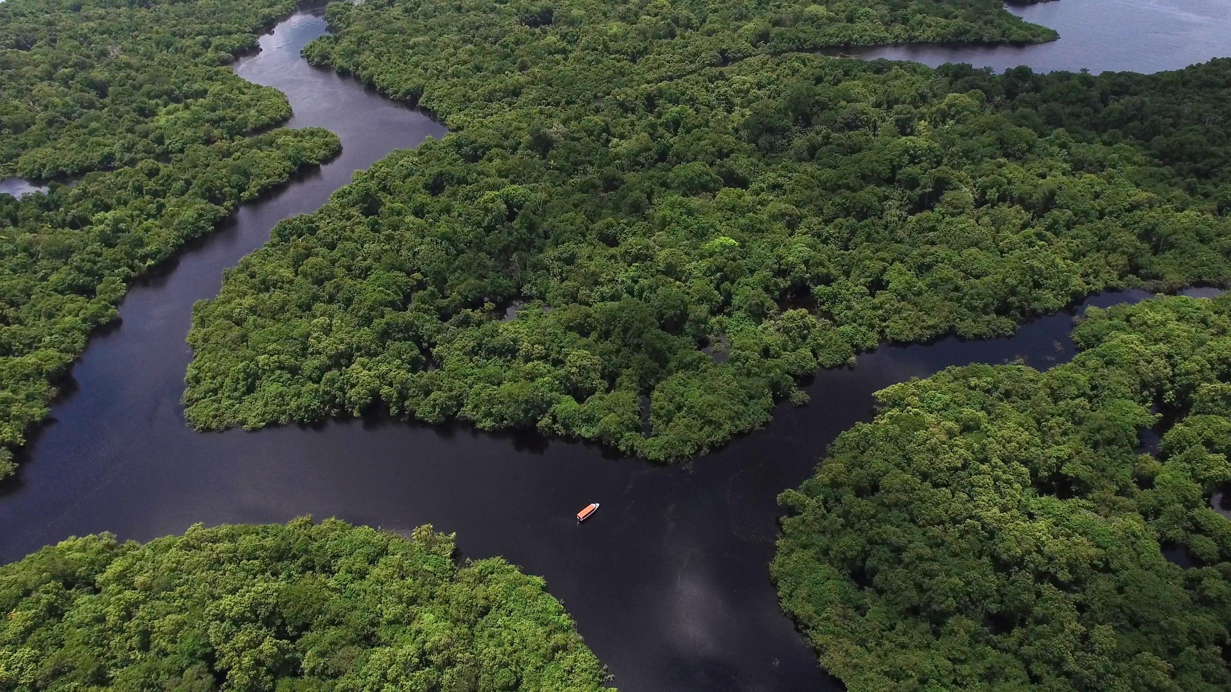 Resultado de imagem para IMAGEM PARA A FLORESTA AMAZÔNICA