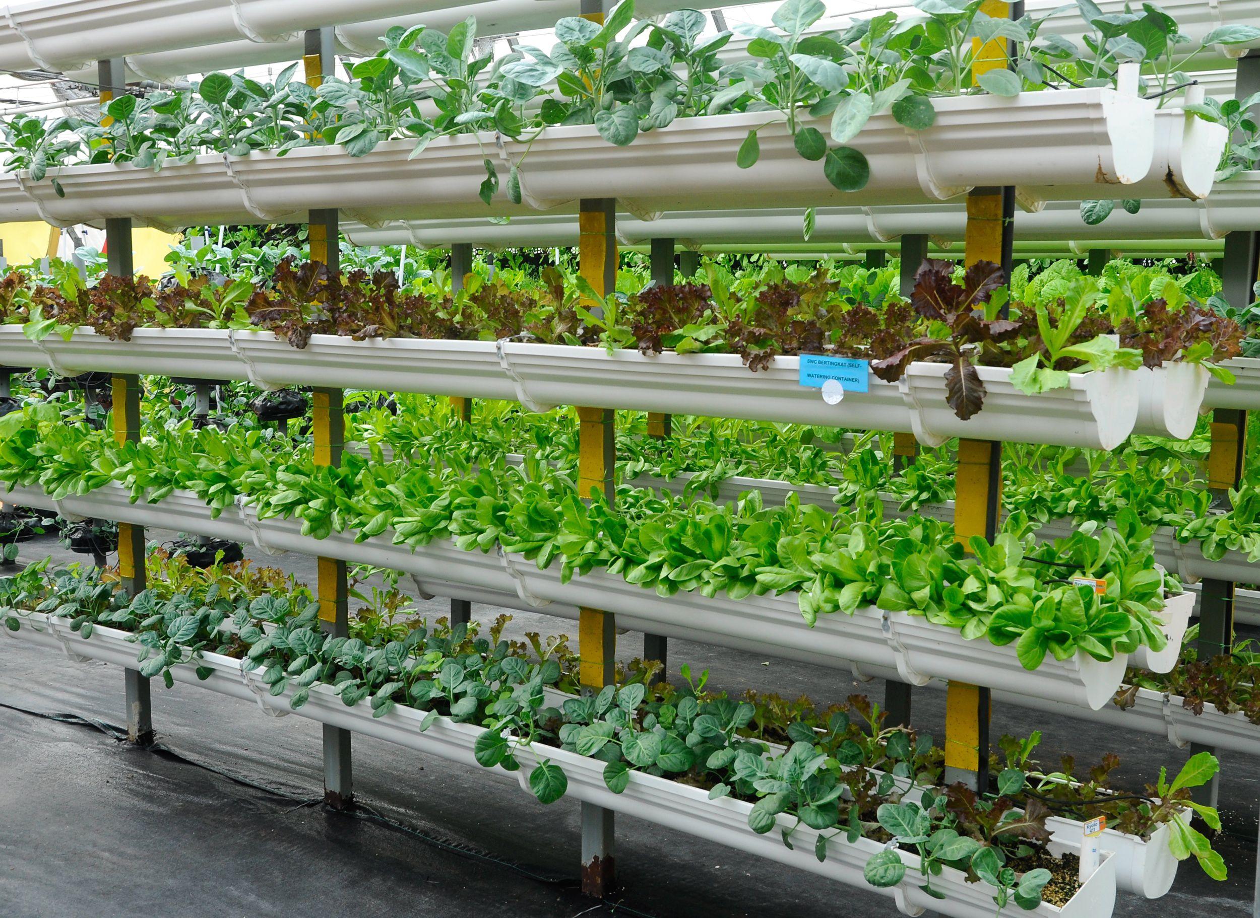 Vertical Vegetable Garden Fence