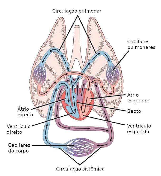 negi genitale în orsk papillomavirus humains oncogenes
